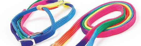 Halsband & Geschirr