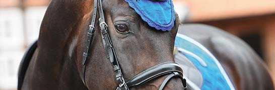 Pferd & Reiter