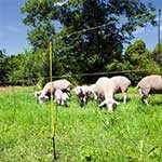 Agrar & Hobbyfarm