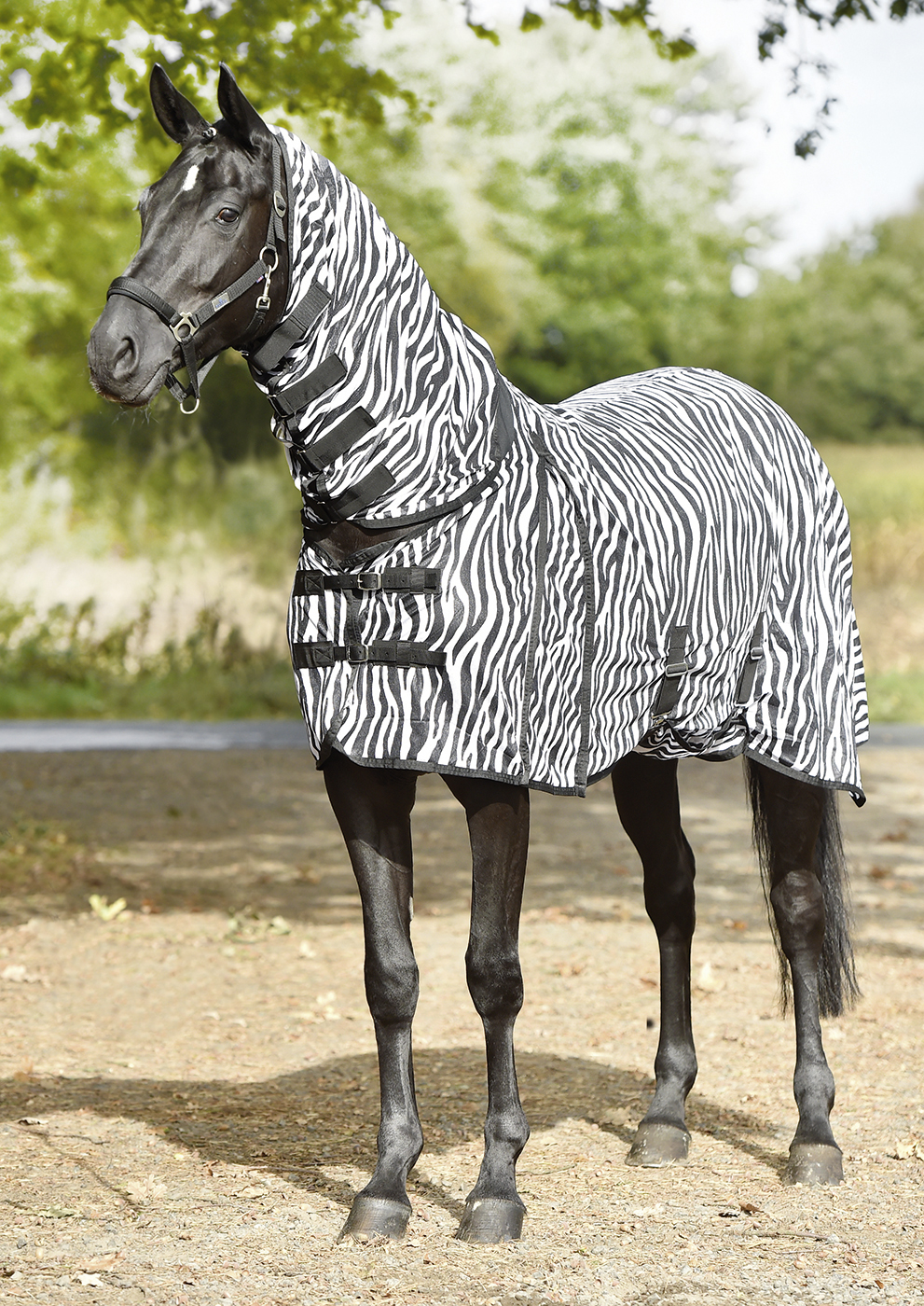 Zebra Fliegendecke